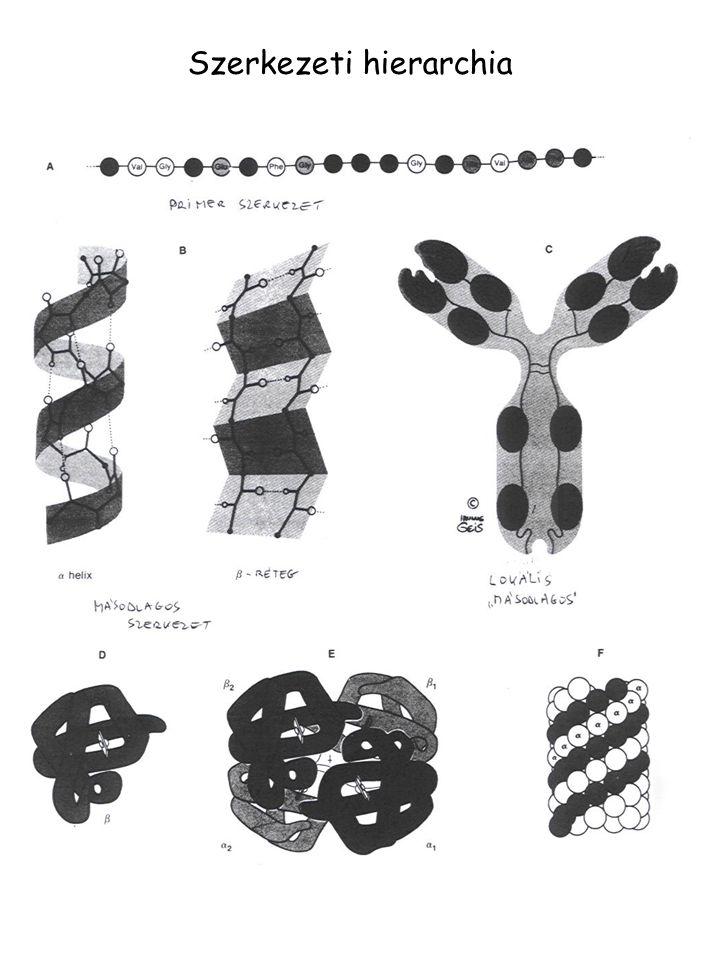 Szerkezeti hierarchia