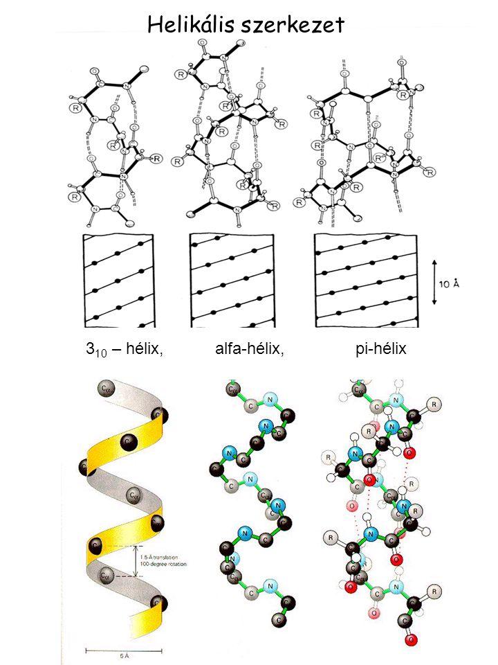 310 – hélix, alfa-hélix, pi-hélix
