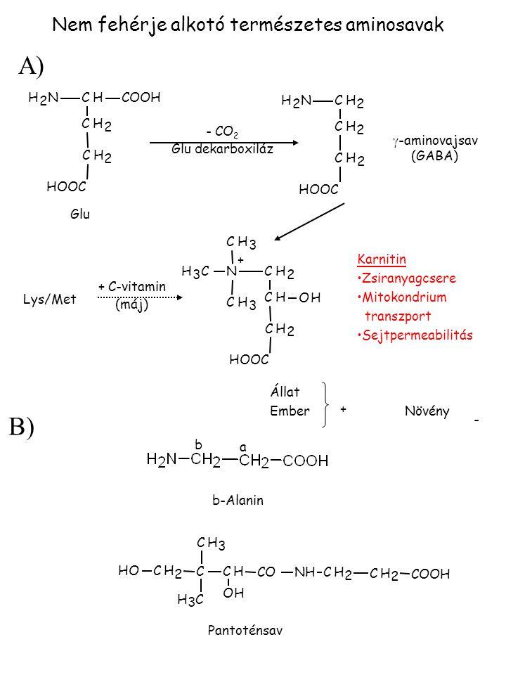 A) B) Nem fehérje alkotó természetes aminosavak H 2 N C H COOH H 2 N C