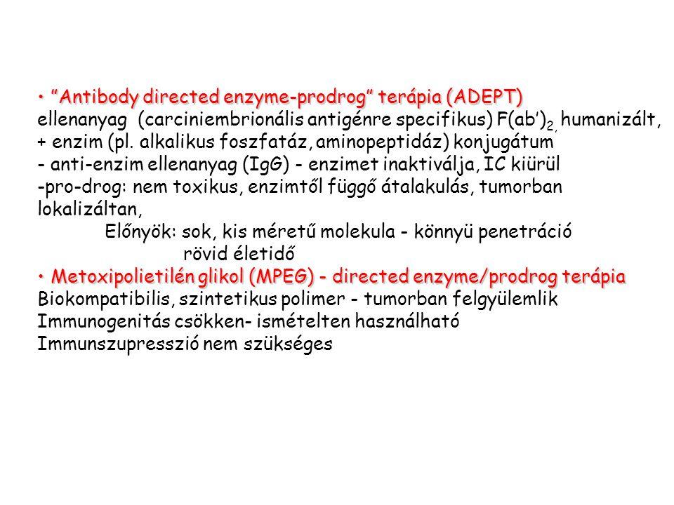 Antibody directed enzyme-prodrog terápia (ADEPT)