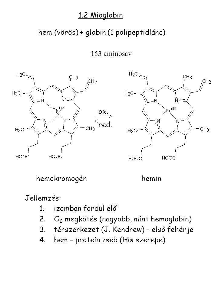 1.2 Mioglobin hem (vörös) + globin (1 polipeptidlánc)