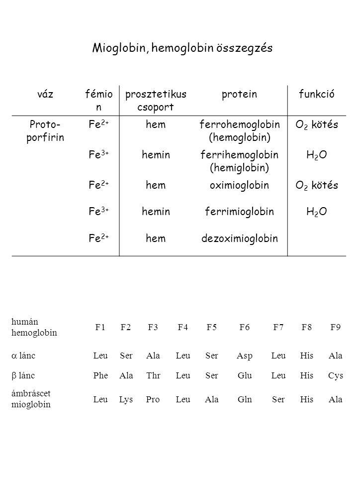 Mioglobin, hemoglobin összegzés