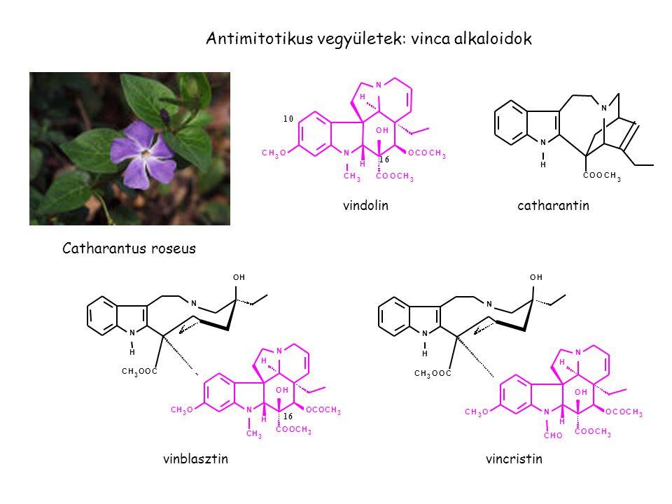 Antimitotikus vegyületek: vinca alkaloidok
