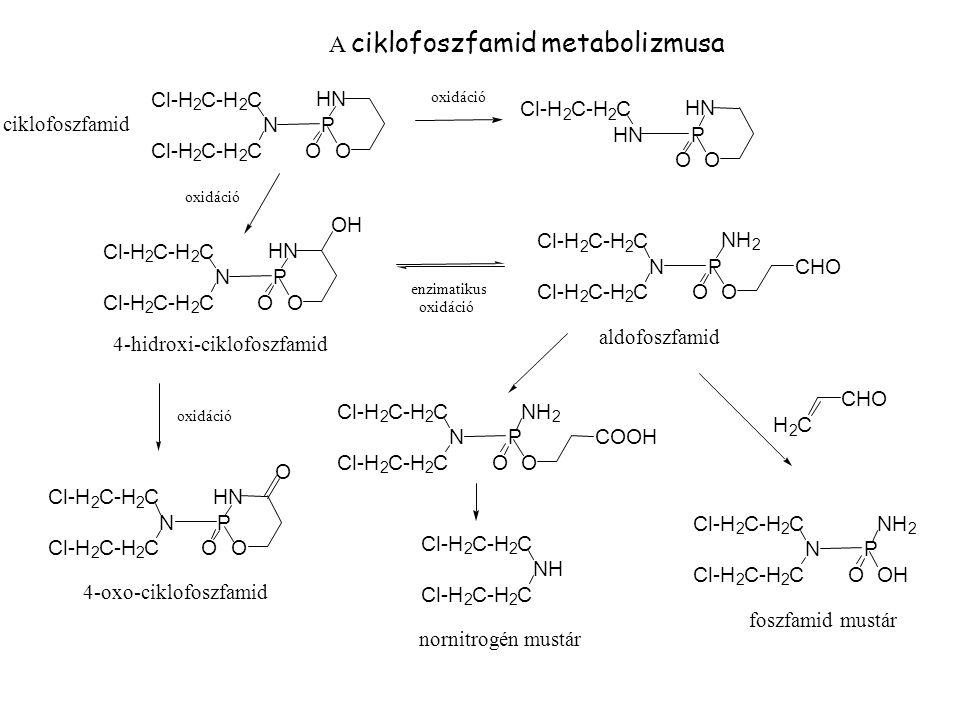 A ciklofoszfamid metabolizmusa