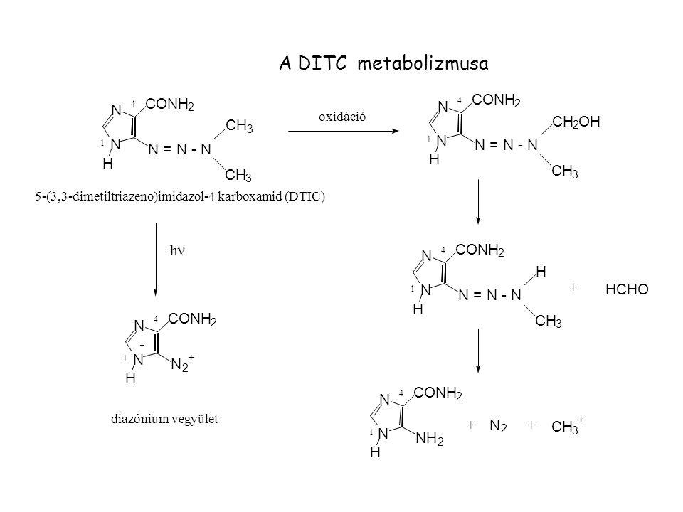 A DITC metabolizmusa - CONH OH CH N N = N - N H h n HCHO NH oxidáció