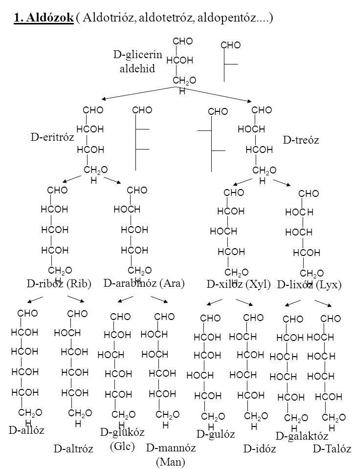 1. Aldózok ( Aldotrióz, aldotetróz, aldopentóz....)