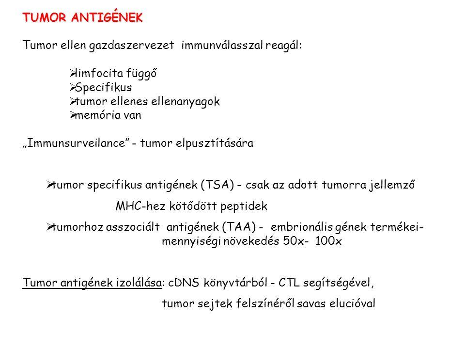TUMOR ANTIGÉNEK Tumor ellen gazdaszervezet immunválasszal reagál: limfocita függő. Specifikus.