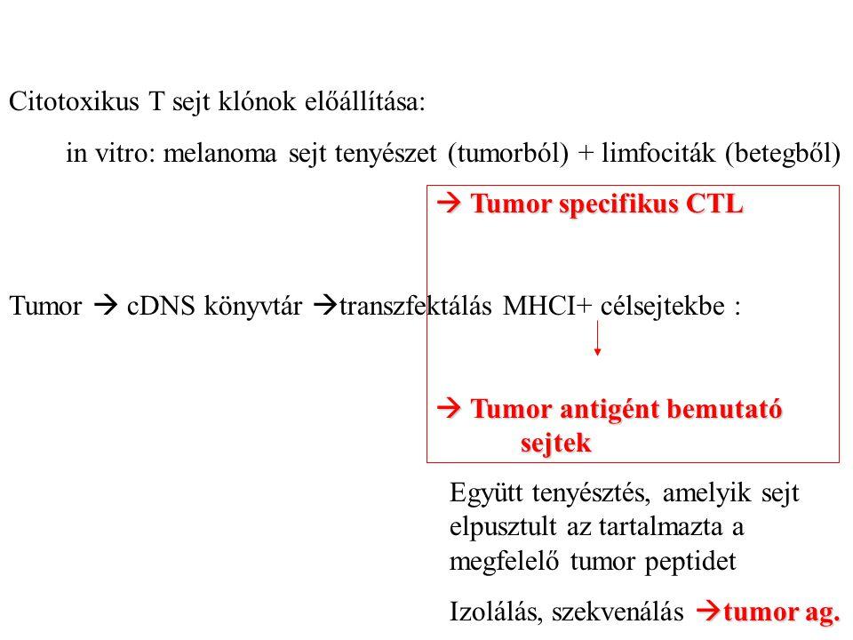Citotoxikus T sejt klónok előállítása: