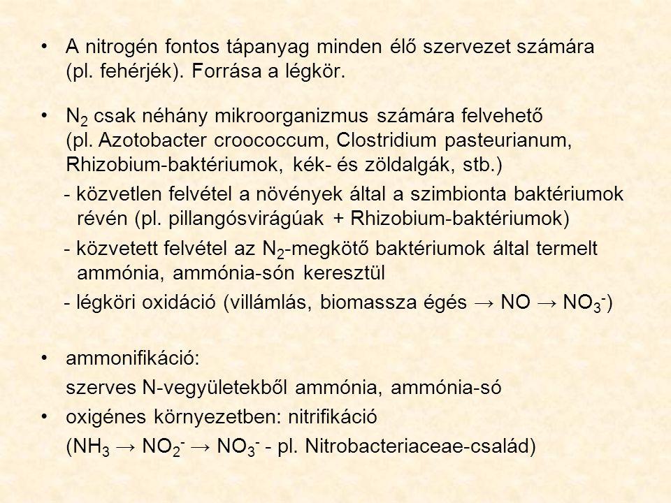 A nitrogén fontos tápanyag minden élő szervezet számára (pl. fehérjék)