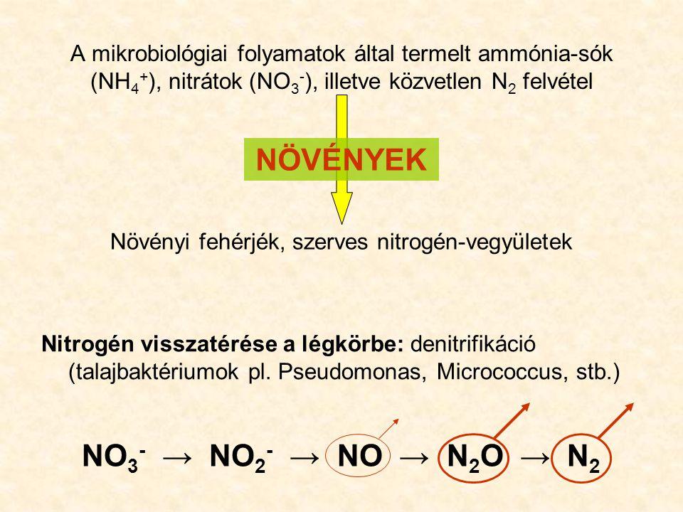 Növényi fehérjék, szerves nitrogén-vegyületek