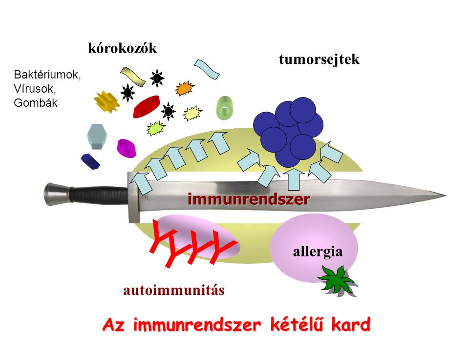 Az immunrendszer kétélű kard