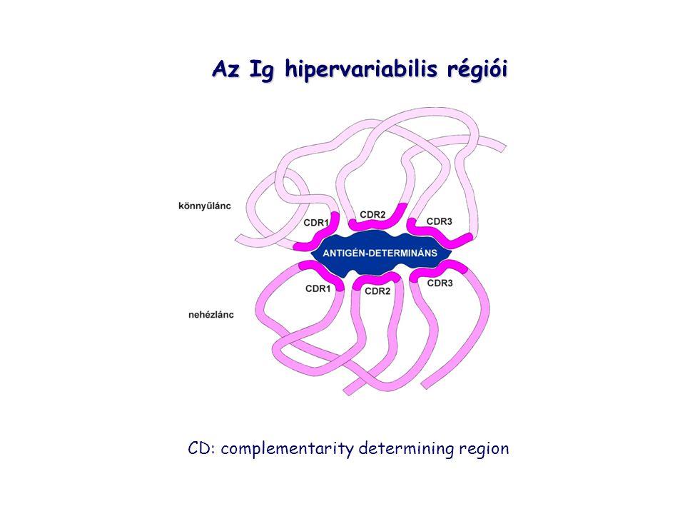 Az Ig hipervariabilis régiói