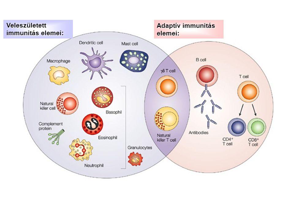 Veleszületett immunitás elemei: