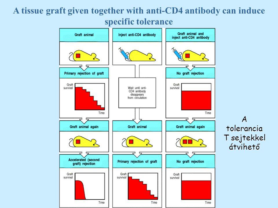 A tolerancia T sejtekkel átvihető