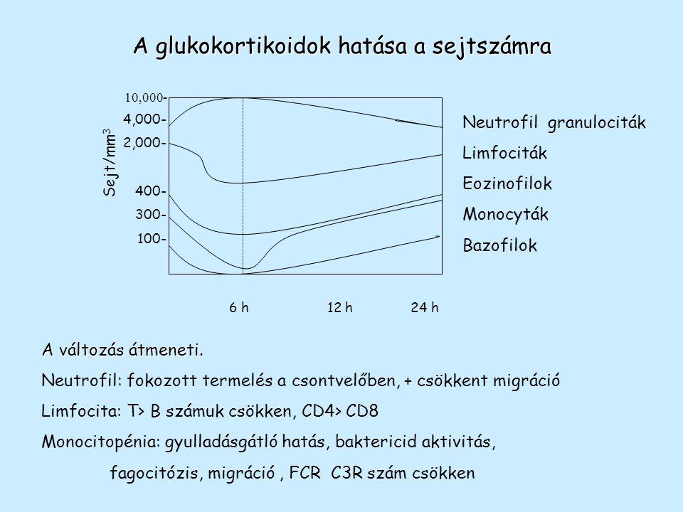 A glukokortikoidok hatása a sejtszámra
