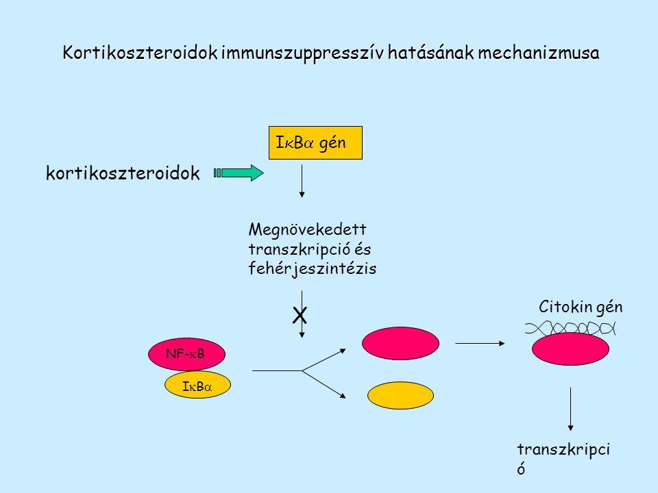 X Kortikoszteroidok immunszuppresszív hatásának mechanizmusa