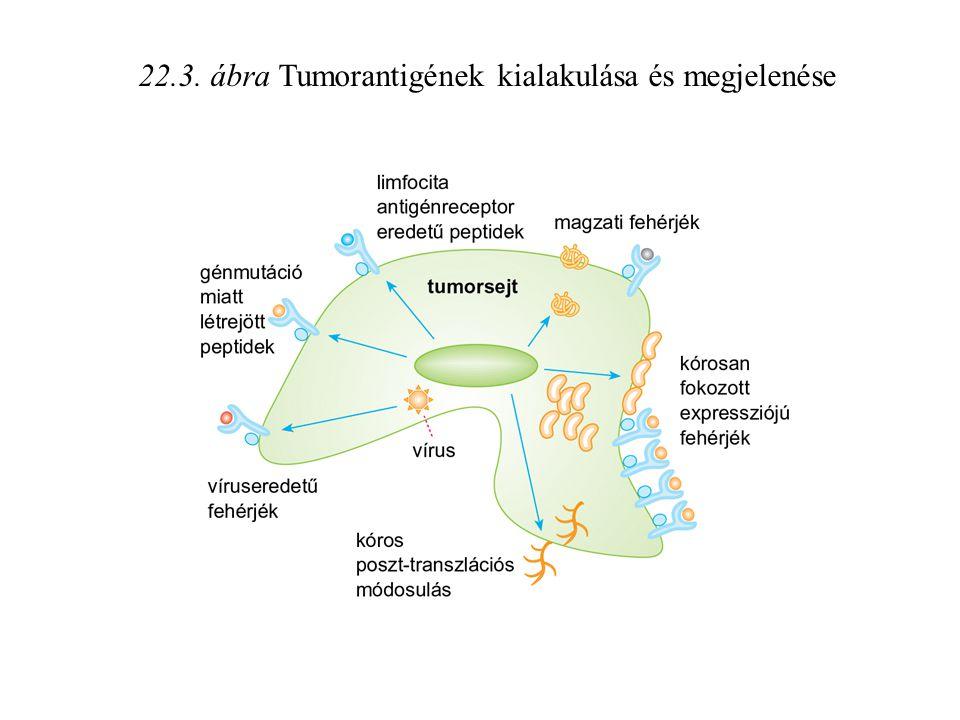 22.3. ábra Tumorantigének kialakulása és megjelenése