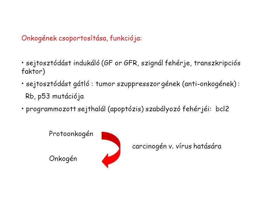Onkogének csoportosítása, funkciója: