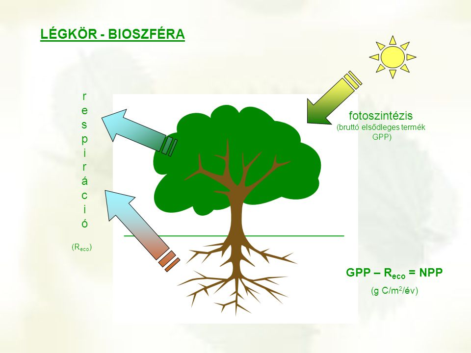 fotoszintézis (bruttó elsődleges termék GPP)