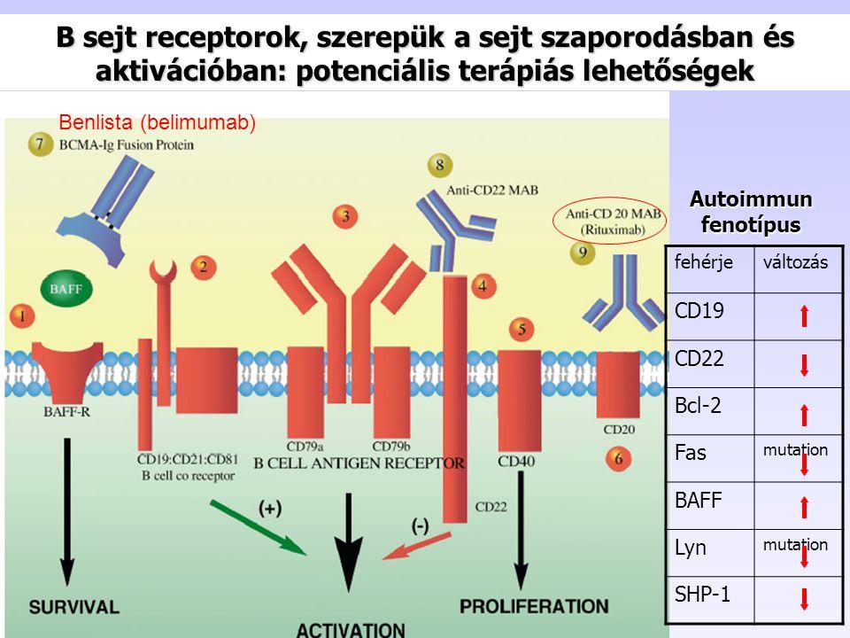 B sejt receptorok, szerepük a sejt szaporodásban és aktivációban: potenciális terápiás lehetőségek
