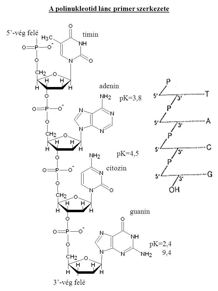 A polinukleotid lánc primer szerkezete