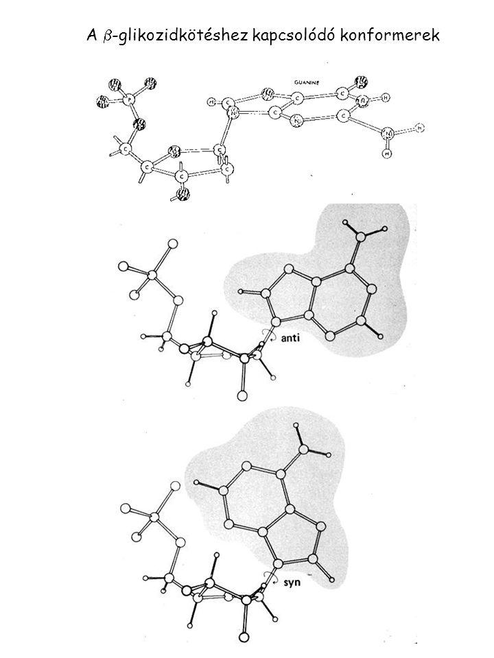 A b-glikozidkötéshez kapcsolódó konformerek