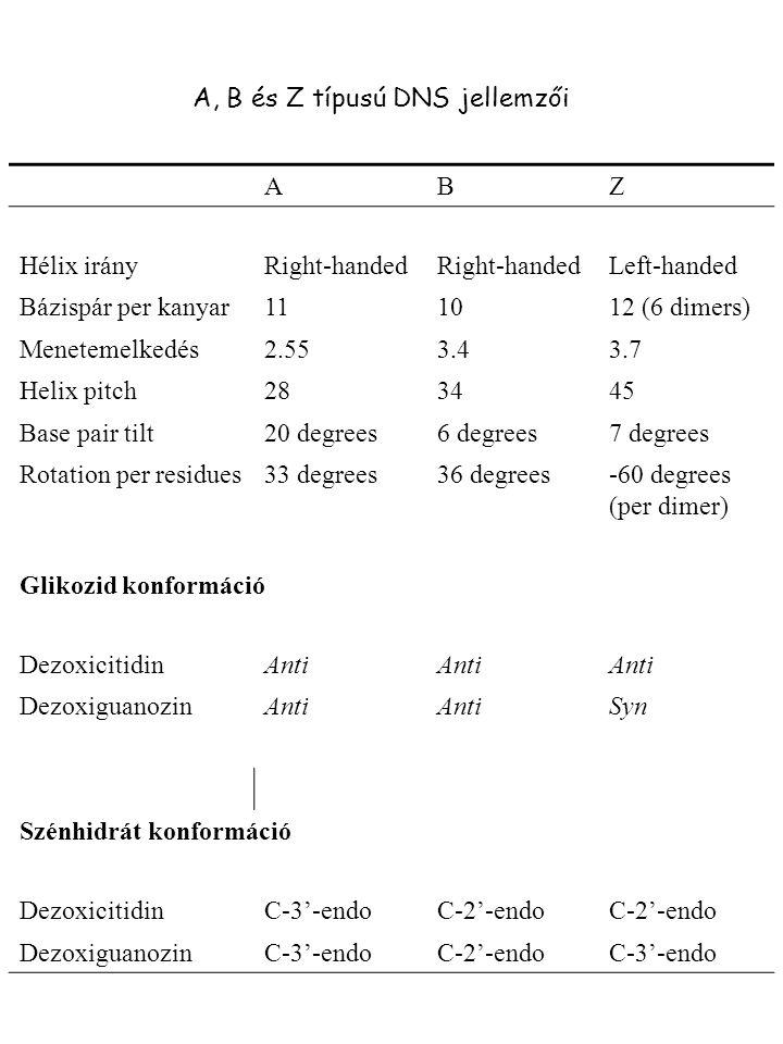 A, B és Z típusú DNS jellemzői