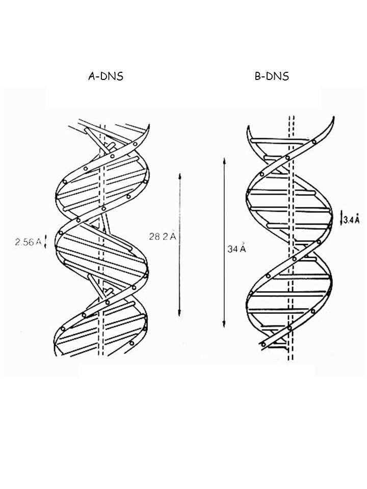 A-DNS B-DNS