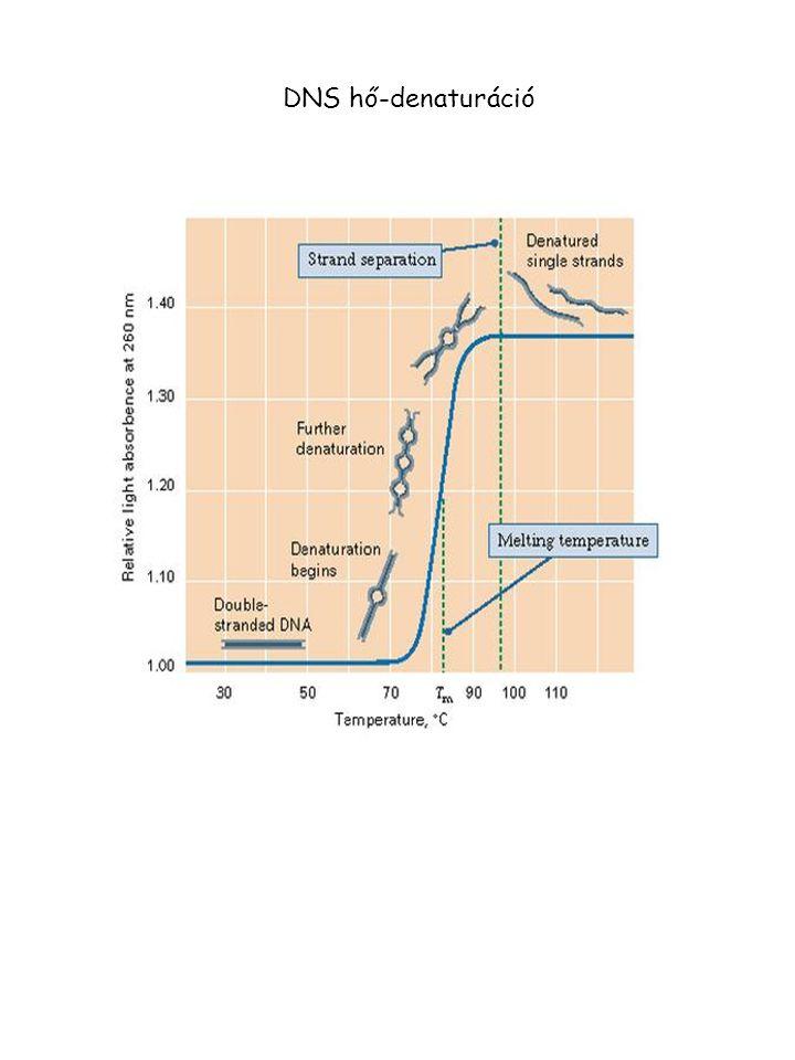 DNS hő-denaturáció