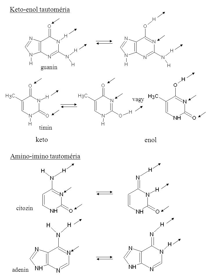 Amino-imino tautoméria