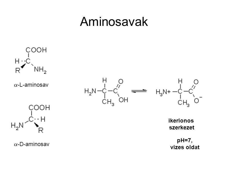Aminosavak a-L-aminosav ikerionos szerkezet pH=7, a-D-aminosav