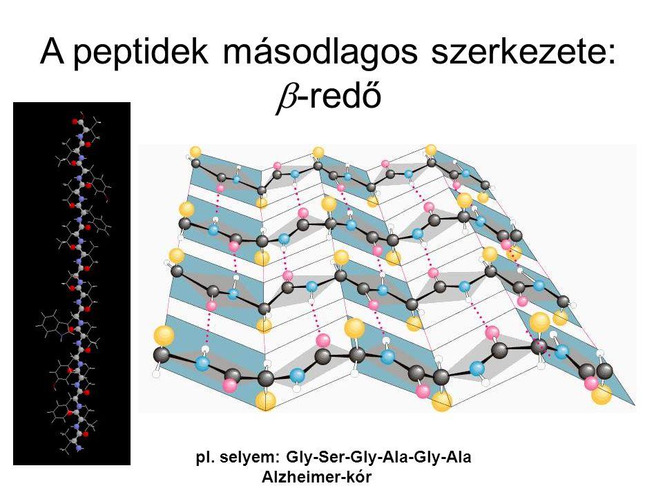 A peptidek másodlagos szerkezete: b-redő