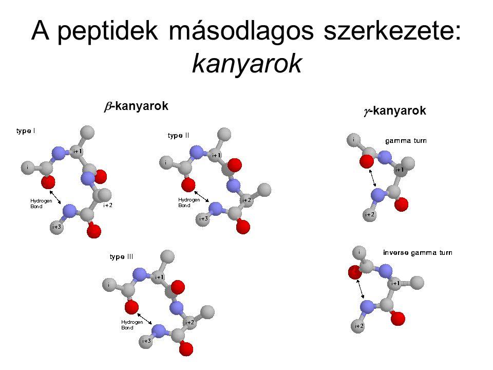 A peptidek másodlagos szerkezete: kanyarok