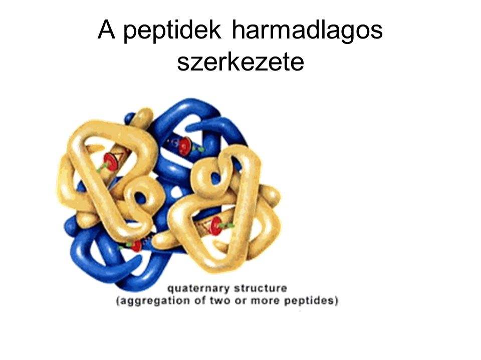 A peptidek harmadlagos szerkezete