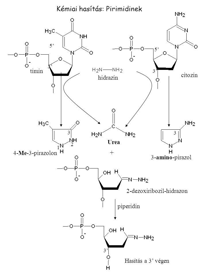 Kémiai hasítás: Pirimidinek