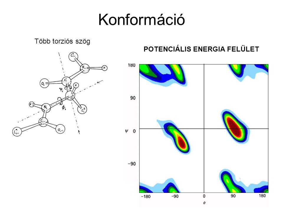 Konformáció Több torziós szög POTENCIÁLIS ENERGIA FELÜLET