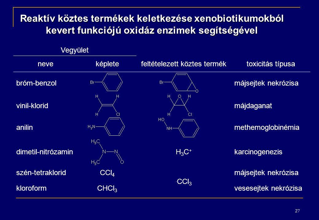 Reaktív köztes termékek keletkezése xenobiotikumokból