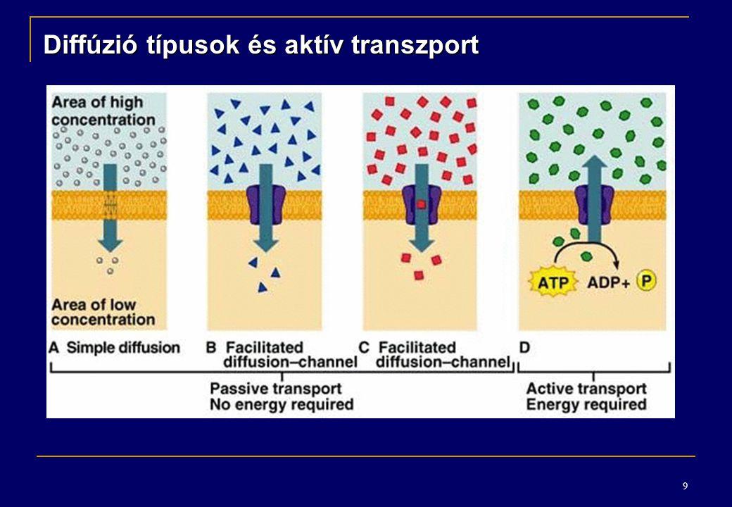 Diffúzió típusok és aktív transzport