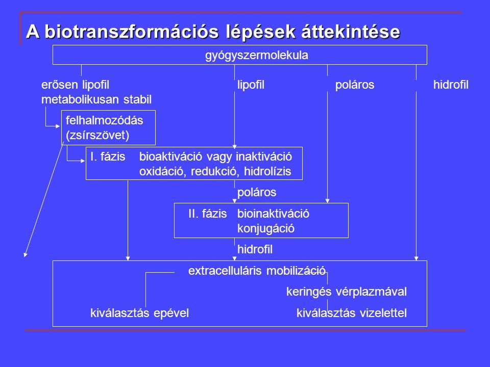 A biotranszformációs lépések áttekintése