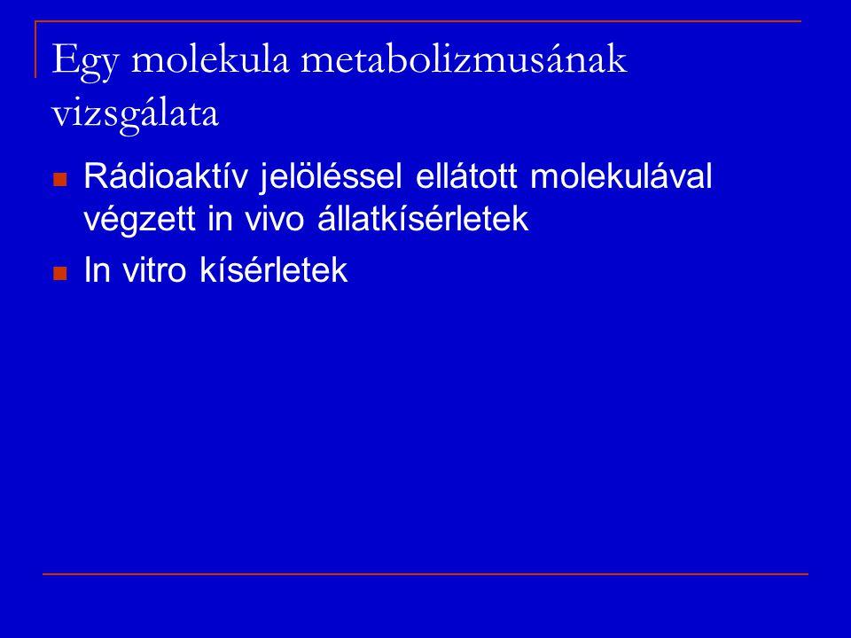 Egy molekula metabolizmusának vizsgálata