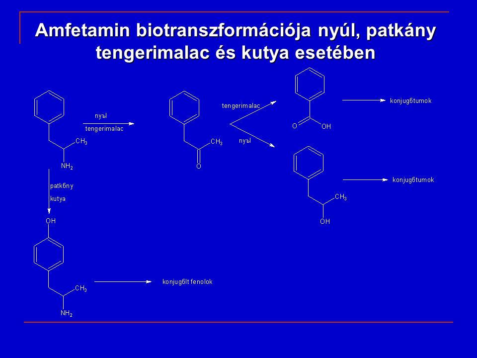 Amfetamin biotranszformációja nyúl, patkány