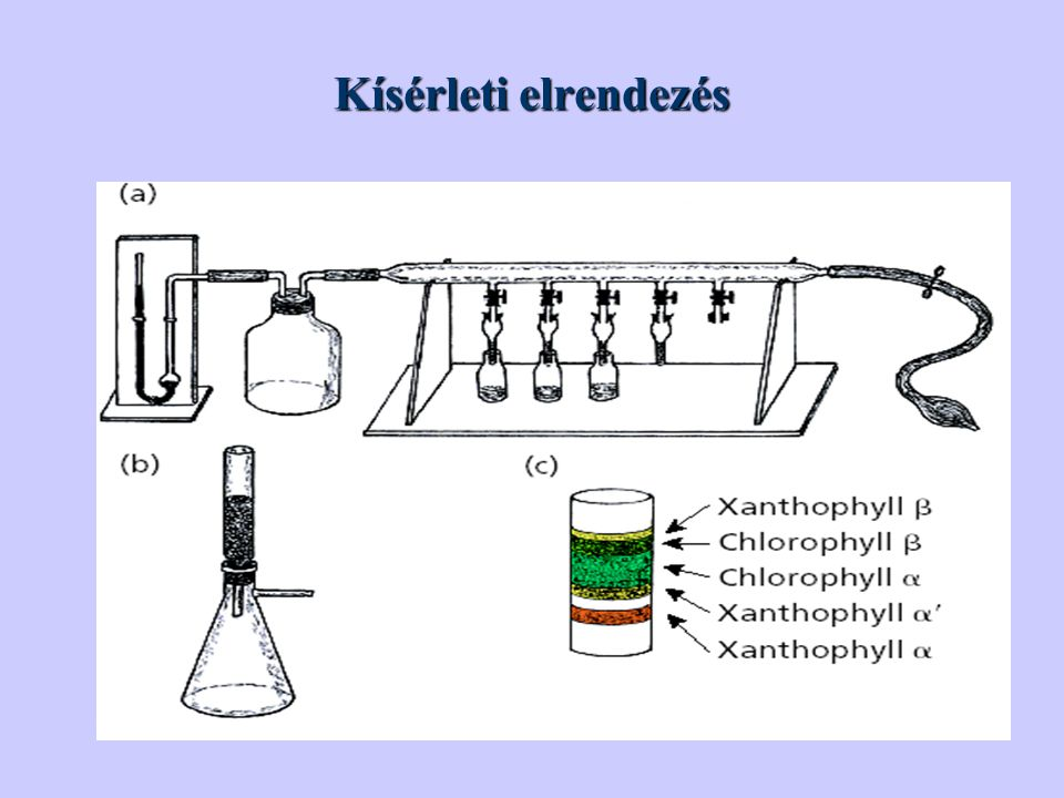 Kísérleti elrendezés Figure 2 shows the illustrations included in Tswett's 1906. paper.6,10,11 His fairly simple laboratory setup consisted of.