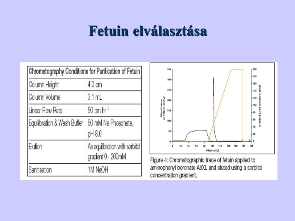 Fetuin elválasztása Fetuin is a serum glycoprotein widely distributed