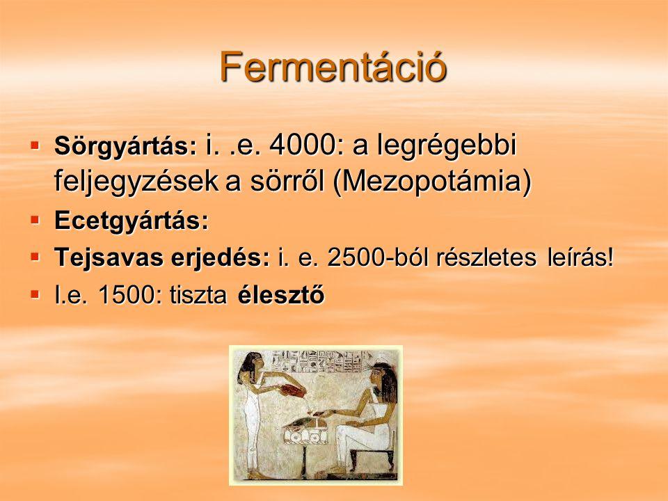 Fermentáció Sörgyártás: i. .e. 4000: a legrégebbi feljegyzések a sörről (Mezopotámia) Ecetgyártás: