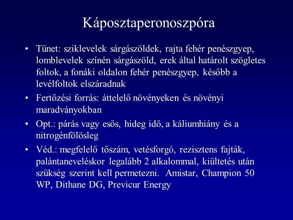 Káposztaperonoszpóra