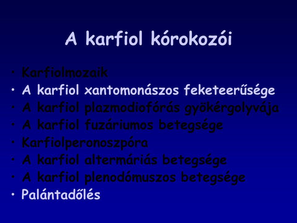 A karfiol kórokozói Karfiolmozaik