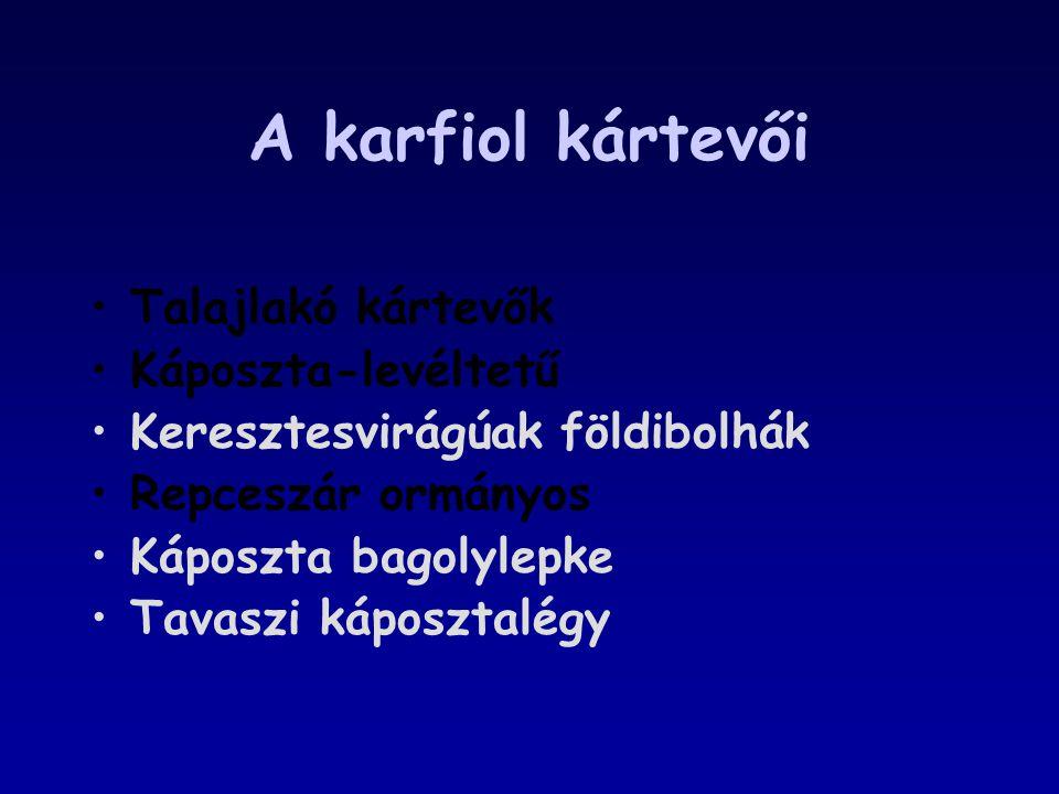A karfiol kártevői Talajlakó kártevők Káposzta-levéltetű