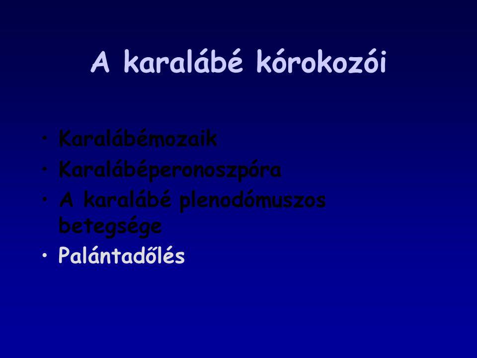 A karalábé kórokozói Karalábémozaik Karalábéperonoszpóra