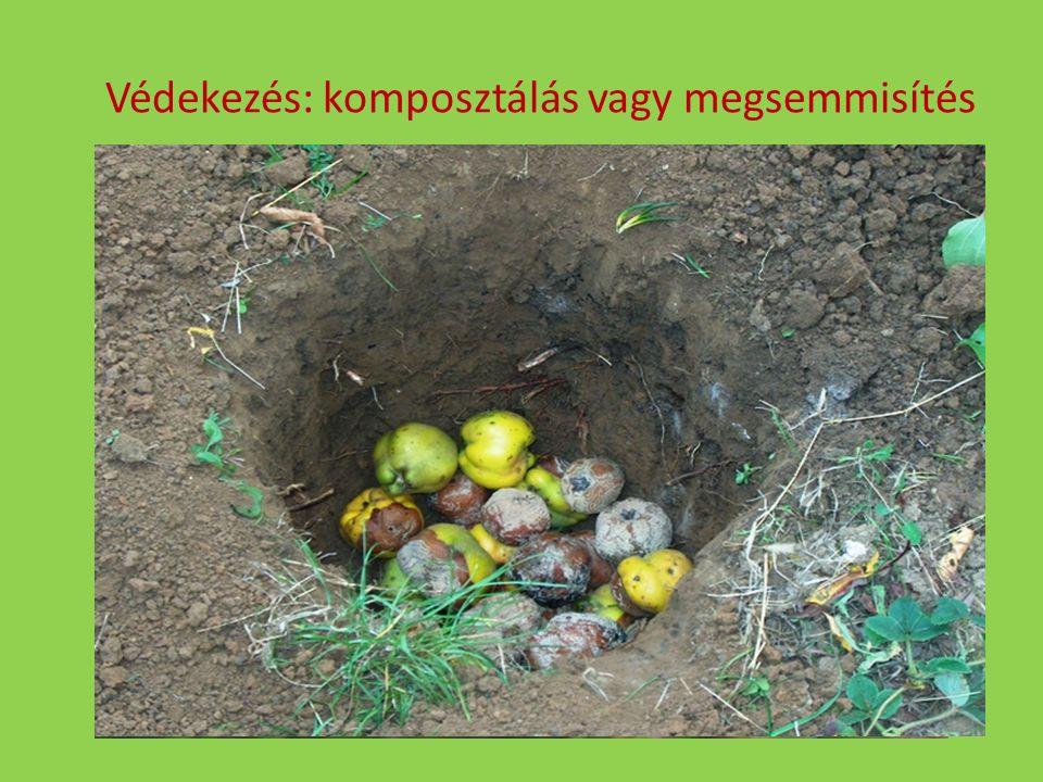 Védekezés: komposztálás vagy megsemmisítés