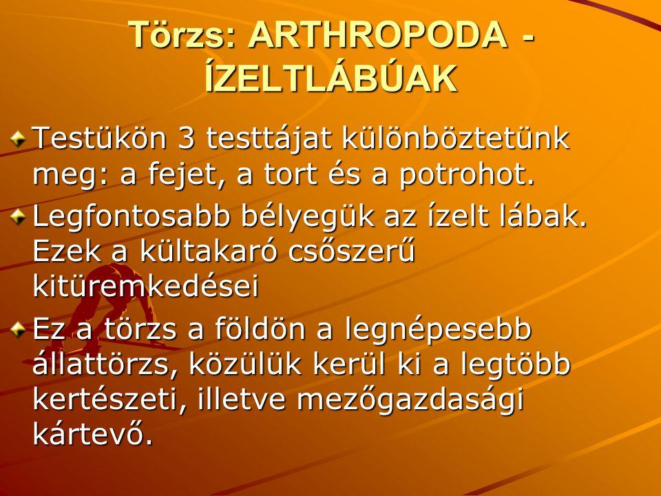 Törzs: ARTHROPODA - ÍZELTLÁBÚAK